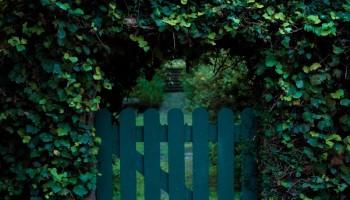 Vemos la puerta de una vaya de jardín, está rodeada por un arco de hojas, en el suelo hay hojas secas. El título del relato es: Mudanza y está escrito por Rocío Ravera.